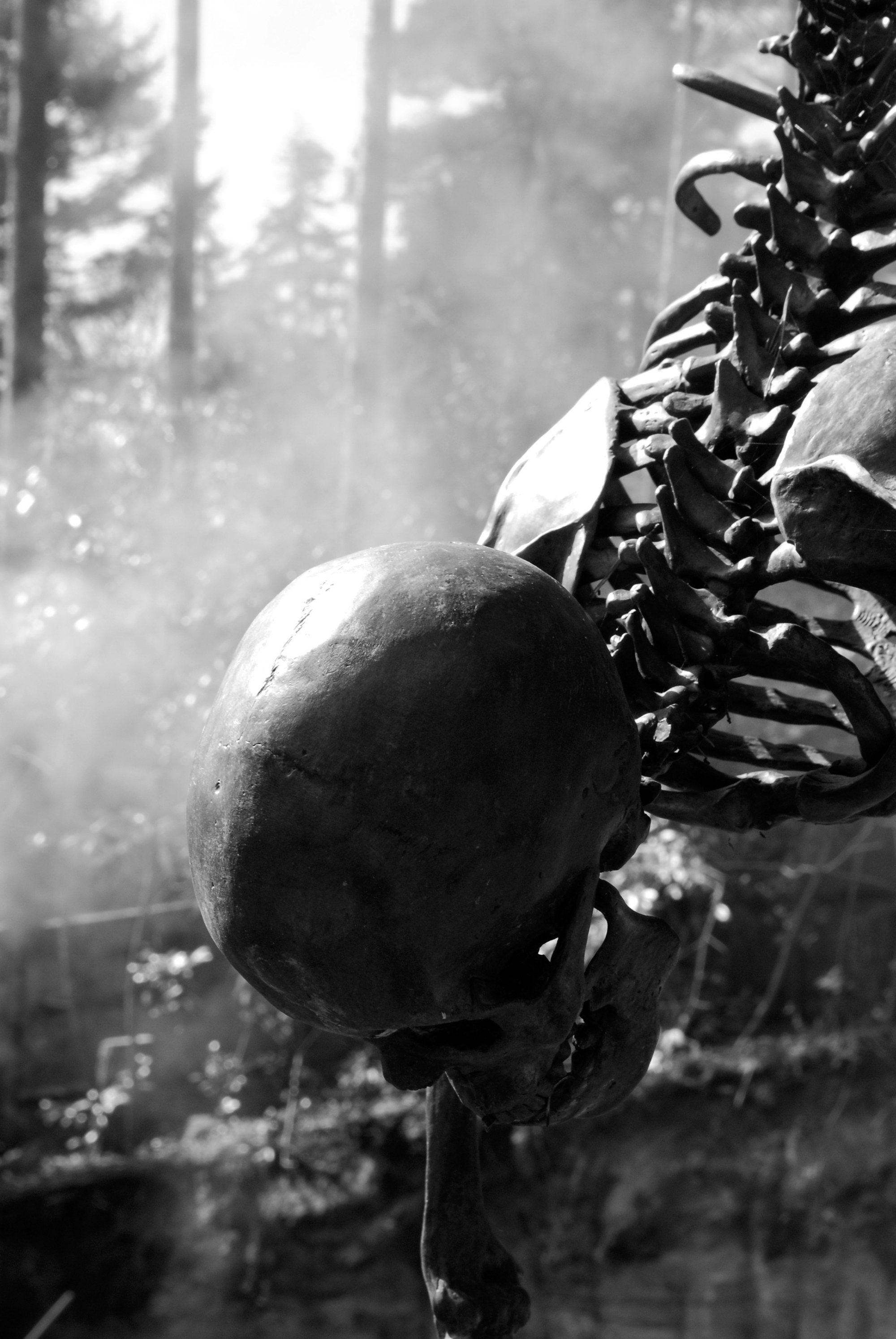 Playful Death